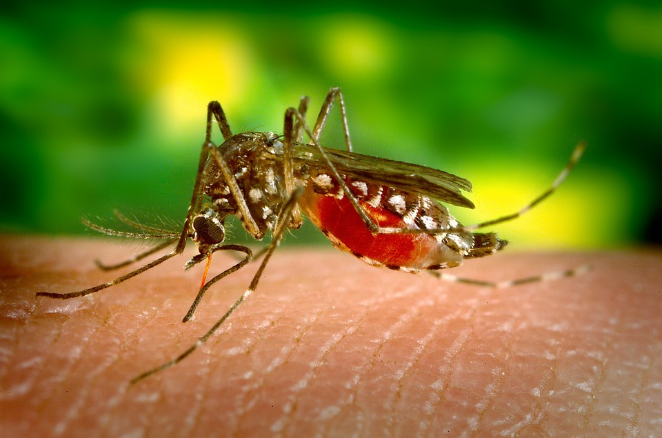 эфирные масла от комаров и мошки