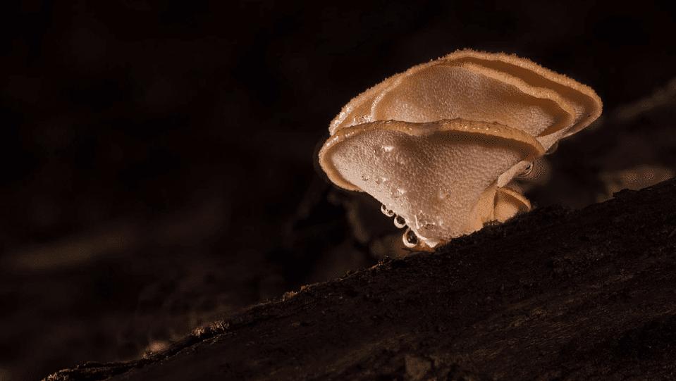 грибная косметика, косметика с грибами