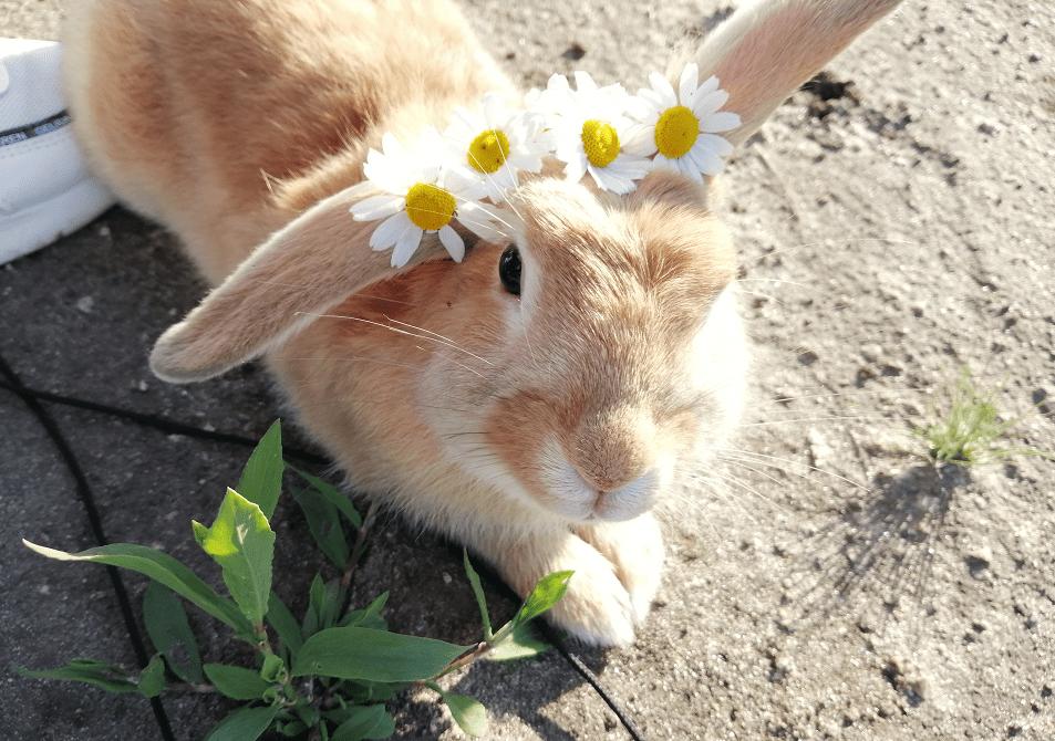 cruelty free косметика, Тестирование косметики на животных